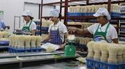 河内全力推动农产品加工业发展