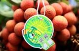 Vietjet объединяет усилия по продвижению экспорта и потребления личи в стране и за рубежом