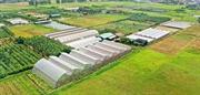 新型コロナ下でもハノイは安全な農産物を生産・消費