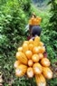 森を通り、村へトウモロコシを運ぶ