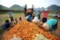 B今年、ザン・ア・パオさんの家族は20トンのトウモロコシを収穫、2000万ドンの収入が見込まれる