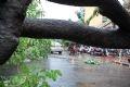 Trận mưa không chỉ gây ngập mà còn làm đổ nhiều cây lớn.