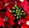 姹紫嫣红的花卉
