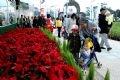 Туристы любуются цветами Далата