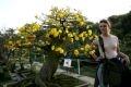 Иностранная туристка осматривает древнее абрикосовое дерево