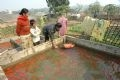 トゥイチャム集落の多くの世帯に池がある