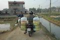 De nombreuses motos de grossistes viennent à Thuy Trâm pour acheter des carpes rouges.