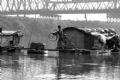 渔民搭桥上岸