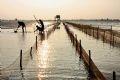 Làm tường rào bảo vệ đầm ngao để khi thủy triều lên ngao không bị sóng đánh trôi ra biển.