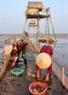"""Tận thu những chú ngao """"ham chơi"""" khi thủy triều lên vượt ra khỏi đầm nuôi."""