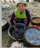 Chị Lê Thị Đưa, 50 tuổi, có chồng và con trai mất tích trong cơn bão Chanchu, nay lại tiếp tục sống bằng nghề thu mua hải sản.