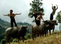 Long-jump competition from the back of buffaloes.