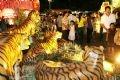 2010庚寅春元宵节的虎群。