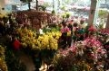 Flower markets are bustling during Tet holidays.