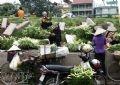 Hoa được đem bán ở dọc triền đê Yên Phụ.