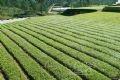 A carrot field.