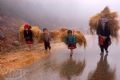 Sáng sớm, khi sương mù chưa tan trên các triền núi, lũ trẻ đã dậy theo mẹ đi lấy cỏ cho trâu.