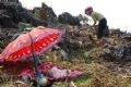 Còn trên đỉnh núi cao, em bé người dân tộc Mông ở xã Lản Nhì Thàng (Tam Đường – Lai Châu) ngủ ngoan cho mẹ cuốc cày gieo hạt.