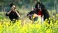 Capturing golden moments on the mustard fields. Photo: Trung Kien
