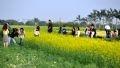 Une excursion en pleine campagne des jeunes sur le champ des fleurs des chrysanthèmes des jardins. (Photo: Hoàng Hà)