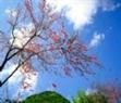 Ambiente primaveral sobre las viviendas