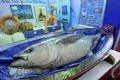 Cá ngừ đại dương, một trong những mặt hàng thuỷ sản cao cấp được giới thiệu tại  Hội chợ.
