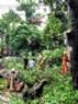 Sáng 25/7, hoàng loạt cây lớn đã bất ngờ đổ vật xuống trên đoạn đường ngã tư Lò Đúc – Hàm Long.