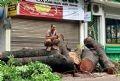 Hè phố phải trở thành bãi chứa gỗ.
