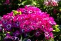 Đủ các màu sắc hoa.