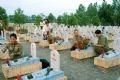 Các cựu chiến binh Hà Nội thăm viếng mộ liệt sĩ tại Nghĩa trang Quốc gia Đường 9, Quảng Trị.