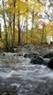 Một góc rừng ở Virginia.
