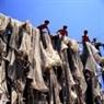 Pescadores del cabo Ca Mau