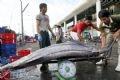 Cân để kiểm tra trọng lượng của từng con cá ngừ đại dương.