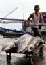 Sau đó được vận chuyển nhanh vào khu tập kết ở trong cảng cá.