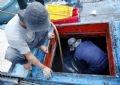Cá được giữ đông trong các hầm lạnh ở trên tàu.