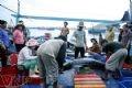 Các thương lái cũng tập trung thu mua cá ngay tại cầu cảng.