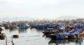Mỗi ngày có khoảng 300 đến 400 tàu thuyền vào bán cá tại cảng Hòn Rớ.