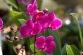 Fleurs aux multiples couleurs.