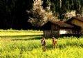 ロロ村への春の訪れ