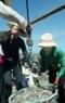 Những mẻ cá tươi roi rói được thương lái phân phối đi các nơi.