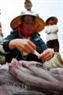 Cá khoai – loại cá đang được thị trường ưa chuộng chỉ có trong mùa cá luồng.