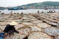 Phơi cá, làm khô, chuyển đi các thị trường trong toàn quốc.