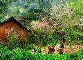 The Spring comes to a Lo Lo ethnic hamlet