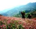 Le village H'mông au printemps.