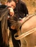 To select a good horse, the horse dealer also checks carefully the horse's hair.