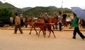 A Mong family leads a horse and its colt to Bac Ha market to sell.