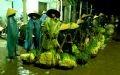 午前3時の市場、野菜を売る女性たちの様子