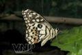 緑色の葉に熱帯の蝶