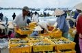 Fish being classified and packaged into trays for transporting to neighbouring areas.