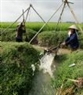 Taking water to the fields – a familiar image in the Red River delta plain.